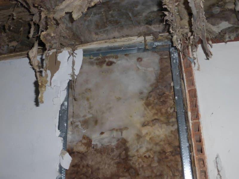champignon liginivore dans une pièce humide